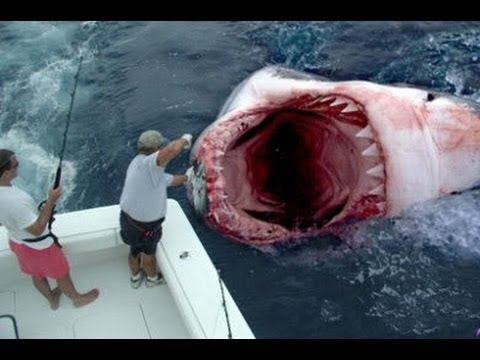 GOD SAVES MAN FROM GREAT WHITE SHARK ATTACK