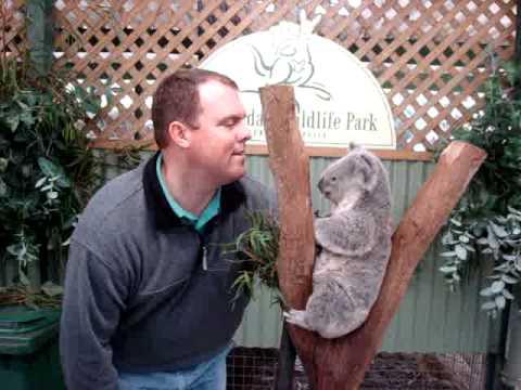 Koala Soft Australia