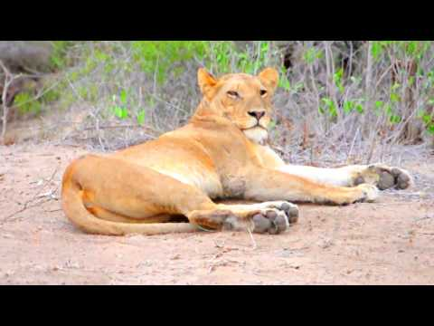 South africa Tour 2016 - panorama route, kruger nationalpark and capetown #4k/720p