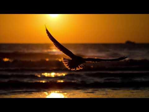 Chris Yann Fly Away