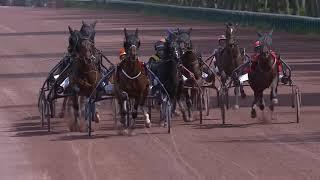 Vidéo de la course PMU PRIX DE LITTRY