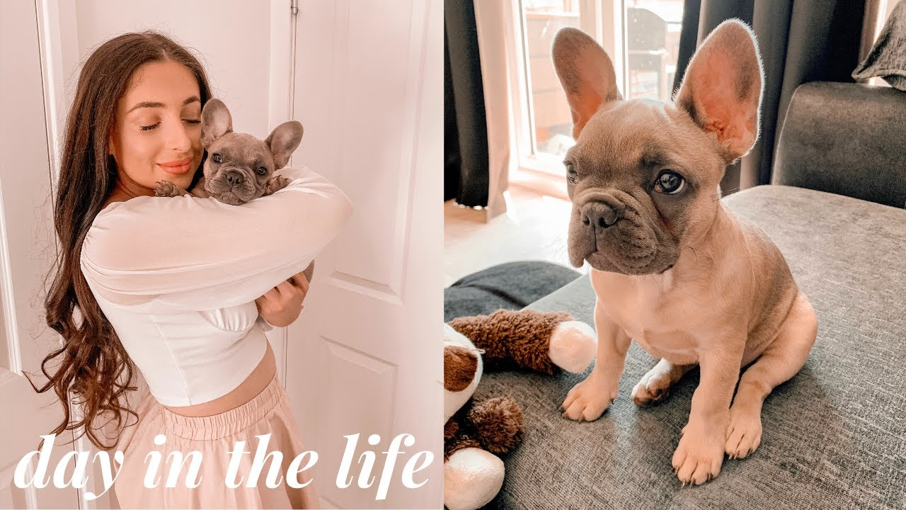 A DAY IN THE LIFE OF MY FRENCHIE PUPPY! Morning Routine & Training A New Puppy Commands!