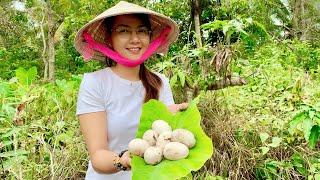 Vlog 55|Ra Vườn Thăm Ổ Cò Lượm Được Trứng Về Cho Cô 2 Trổ Tài Làm Bếp Chính| Hồ Thùy Dương Vlog