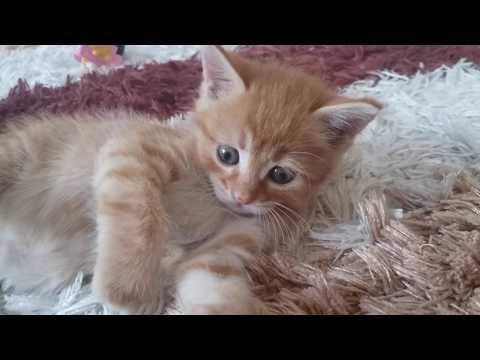 Yavru Kedi Videolari Kedilerin Oyunlari Kedi Dovusu Youtube