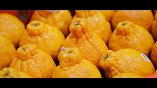 Sumo Citrus by Freshmax