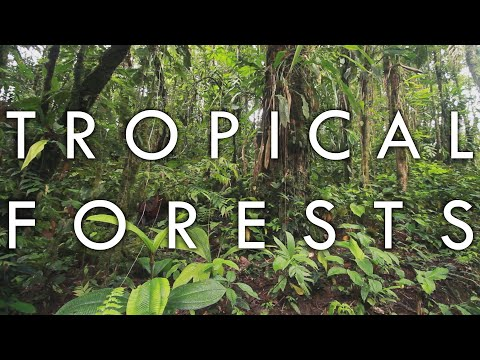Tropical Rainforest and Tropical Seasonal Forest - Biomes#1