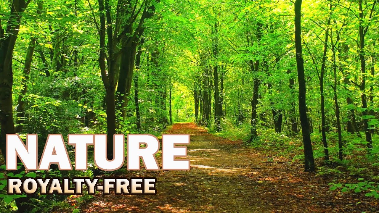 15 Beautiful Nature Stock Footage Royalty Free No Copyright Free Download Royaltyfree Nature Youtube
