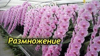 видео Как ухаживать за орхидеей дома, выращивание орхидей в домашних условиях