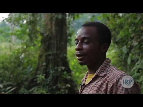 Fighting for their Forests: Illegal Logging in Cameroon