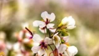 Wisdom (vocal mix) by clelia FELIX