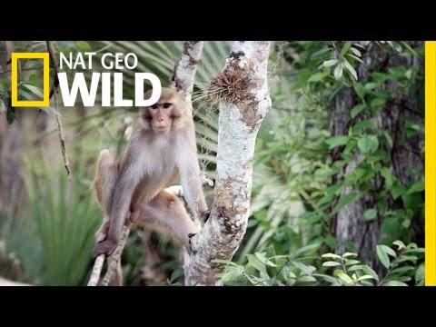Florida Monkey Business | United States of Animals