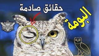 10 حقائق غامضه عن طائر البومة ..أشهر طائر للتشاؤم وماذا قال عنه الرسول ﷺ ؟؟