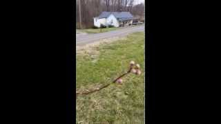 Spring Budding And Homestead Walk 03/22/15