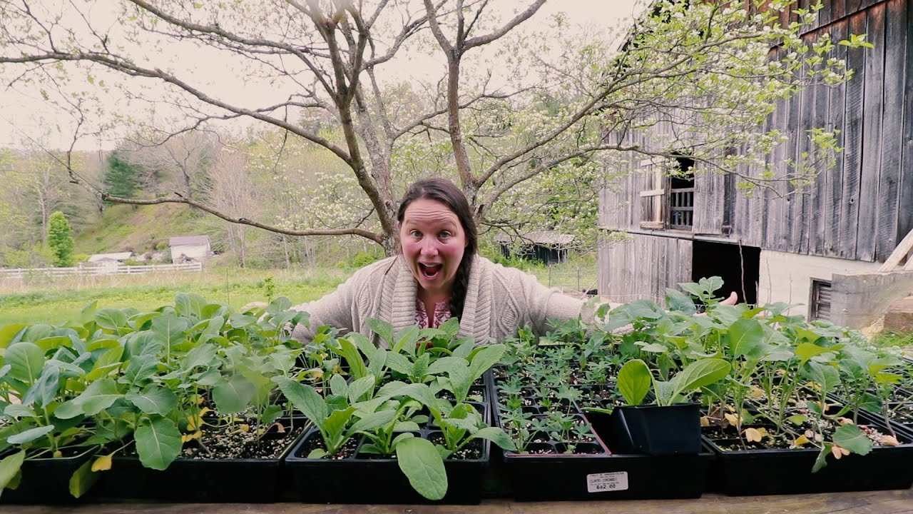 She Bought All These Plants For The Spring Garden Youtube