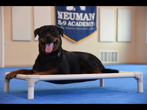 Snickers (Rottweiler) Boot Camp Dog Training Video Demonstration