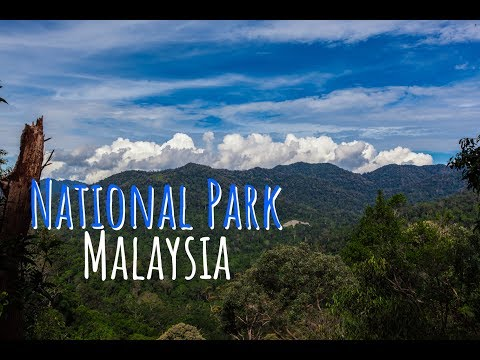 National Park Taman Negara is a complete Jungle! | Follow Mike in Malaysia