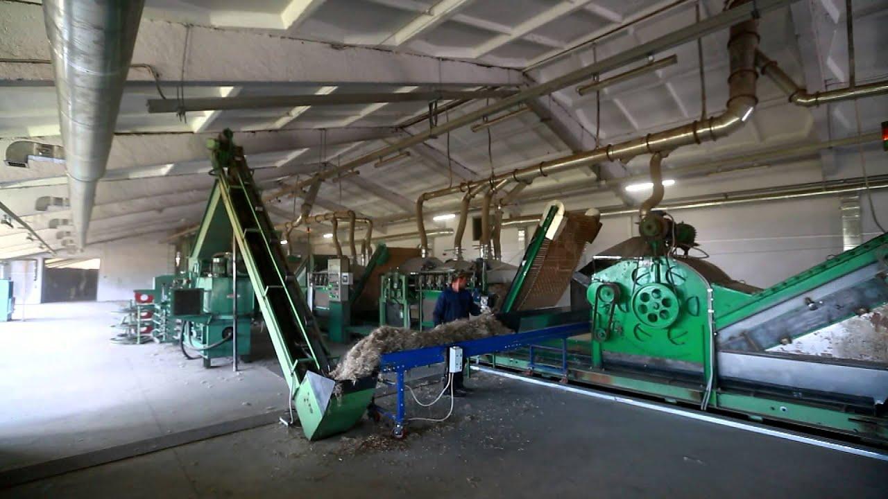 Производство и переработка конопли дальневосточная конопля
