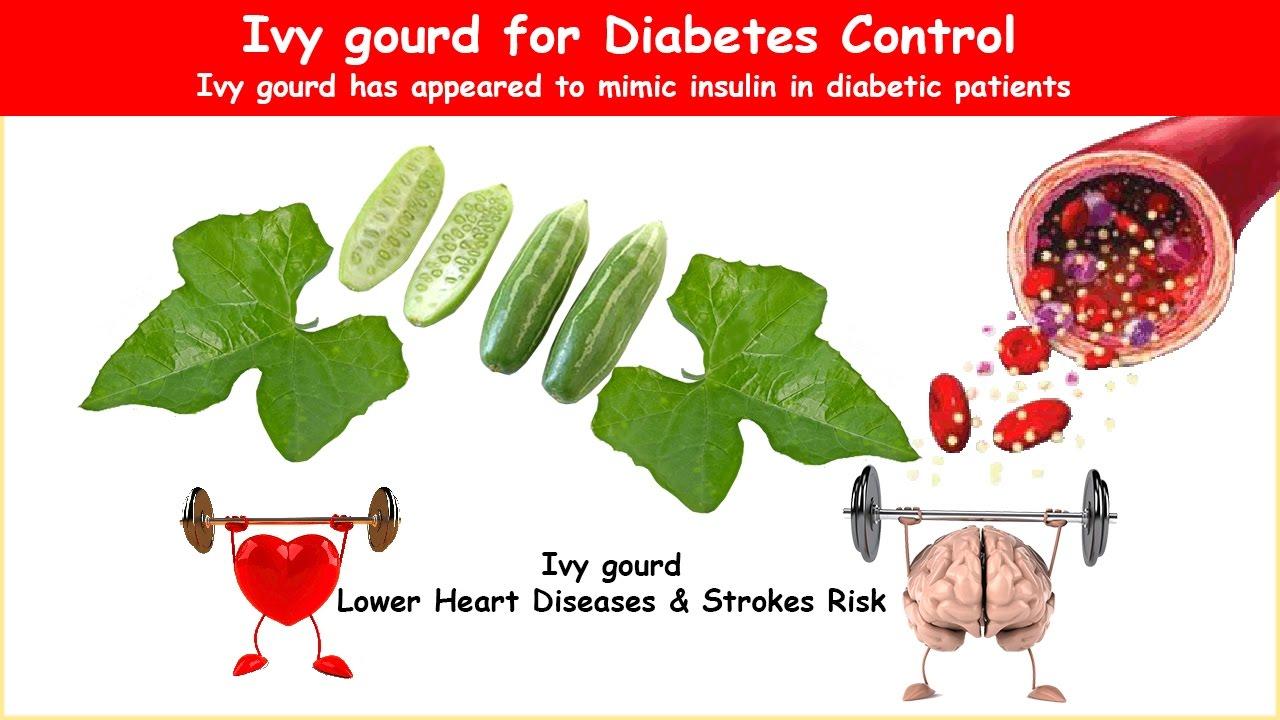 Ivy gourd diabetes