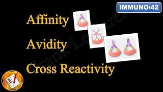 Affinity, Avidity and Cross Reactivity (FL-Immuno/42)
