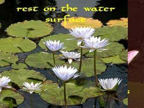 Lotus In Water Plant Diagram Desk Fan Motor Wiring The Vs Lily Youtube