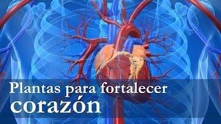Venas del y para hierbas corazon arterias