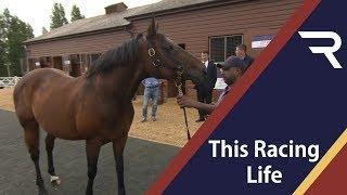 Tattersalls July Sale - This Racing Life - Racing TV