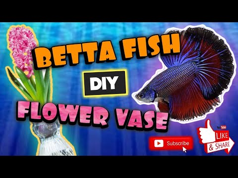BETTA FISH FLOWER VASE SETUP!