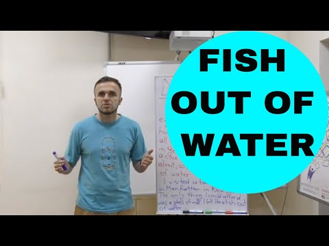 Like A Fish Out Of Water (2019, IDIOMS And Phrases With Meanings)
