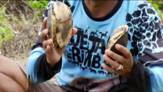 Kura Kura Batok dari Haruku - Jejak Rimba (28/5)