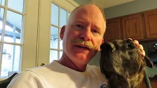Finn the Great Dane Puppy  - 6 Month Update