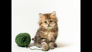 Веселые котики и милые котята | Подборка видео приколов с котами