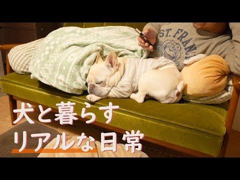 フレンチブルドッグの1日に密着 ~犬と暮らす幸せ~