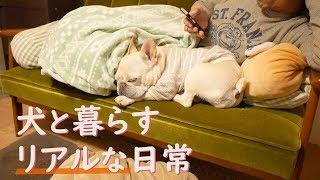 愛犬こうめさんと過ごす生活ももうすぐ丸4年 動画リクエストにあった1日...