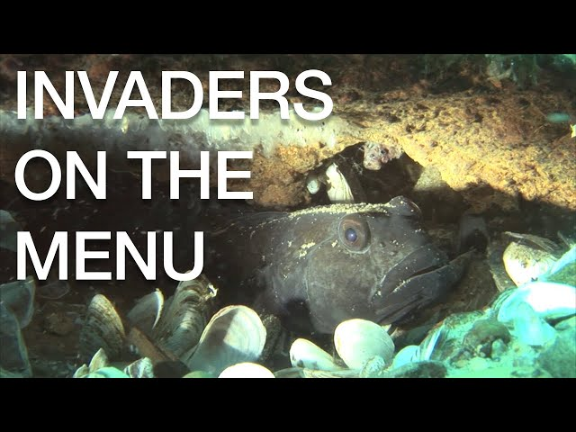 Invaders on the Menu - Great Lakes Now - 1020 - Segment 3