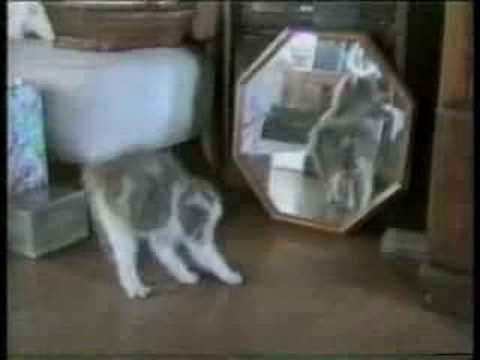America's Funniest Home Videos – Funny Cats(1)
