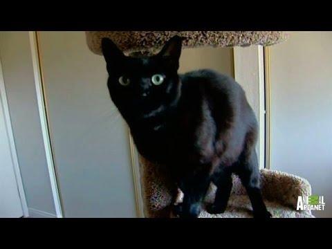 A Feline Turf War   My Cat From Hell