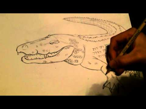 how to draw a saltwater crocodile