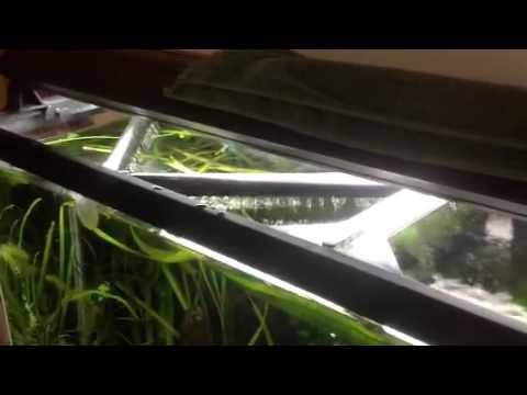55g freshwater fancy goldfish 40g sump.