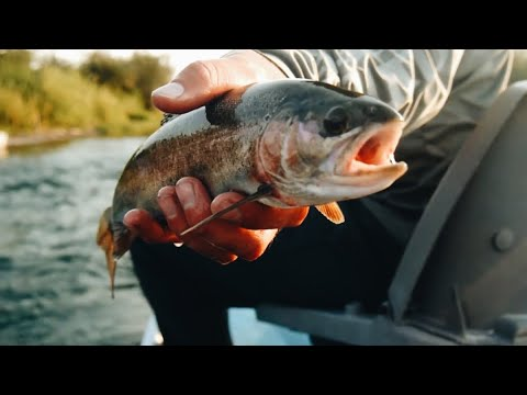 FLY FISHING Yellowstone National Park | Idaho & Wyoming