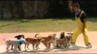 Guinness Book of World Records Presents: The Most Dogs skipping with same rope
