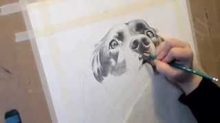Time-lapse Drawing Of A Cocker Spaniel
