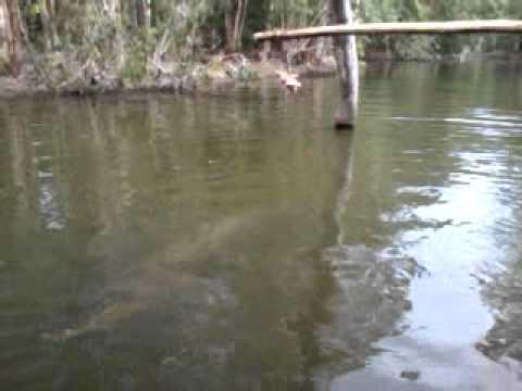 Jumpin Crocodiles in Far North Queensland