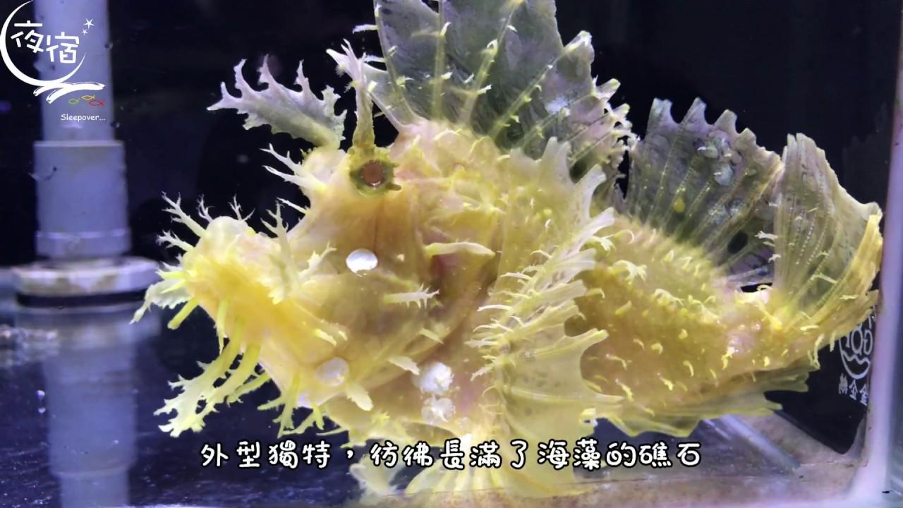 海洋小博士-龍王鮋 - YouTube