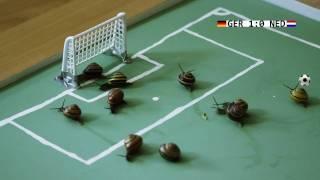 Schneckenball WM - Deutschland gegen Niederlande