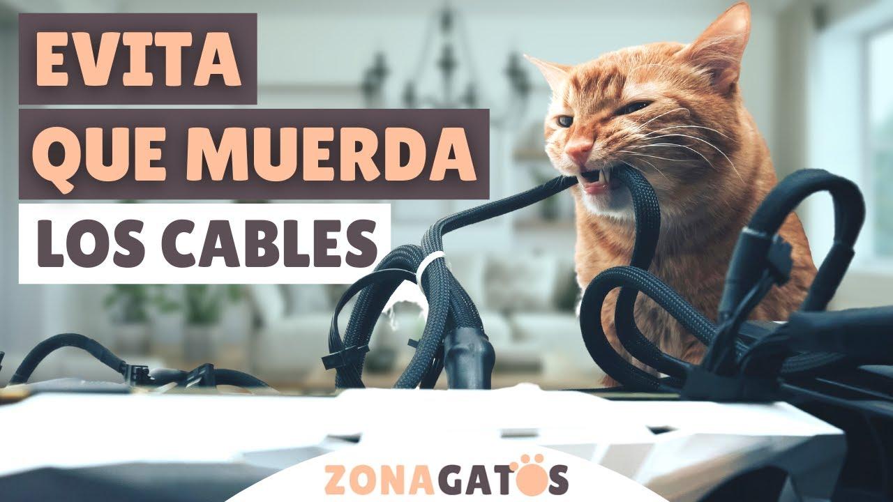 9 consejos para EVITAR que tu gato MUERDA LOS CABLES