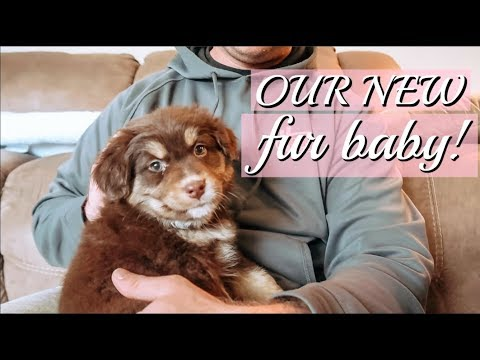 Finally Bringing Our Sweet Fur Baby Home!!! || Our New PUPPY