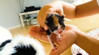 Наша беременная кошка родила 3 котенка ! Едем в больницу