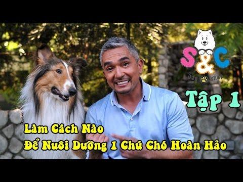 S&C TV - Tập 1 - Làm Cách Nào Nuôi Dưỡng 1 Con Chó Hoàn Hảo