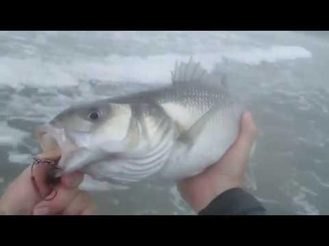 Surf Rip Bass 05.10.15