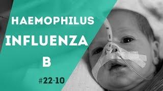 Qu'est ce que l'Haemophilus influenzae ?